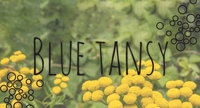 Ingredient Breakdown: Blue Tansy