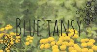 Ingredient Breakdown: Blue Tansy