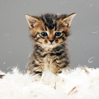 Effective Flea Treatments For Cats