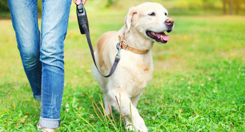 5 Top Rated Retractable Dog Leashes