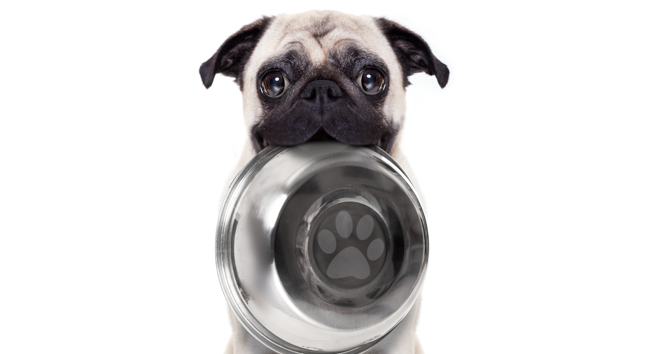 The Best Dog Foods For Puppies: 65K Reviews