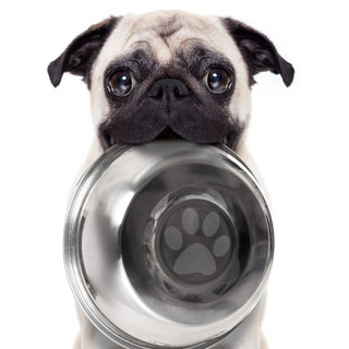 The Best Dog Foods For Puppies: 82K Reviews