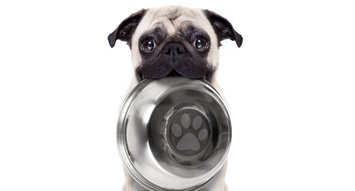 The Best Dog Foods For Puppies: 72K Reviews