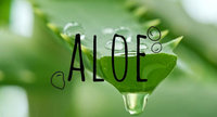 Aloe Is So Much More Than Just Good For Your Sunburn