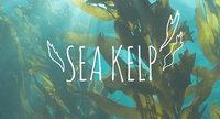 Ingredient Breakdown: Sea Kelp
