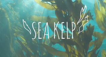 Ingredient Breakdown: Sea Kelp