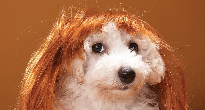 The Best Products to Fight Pet Hair