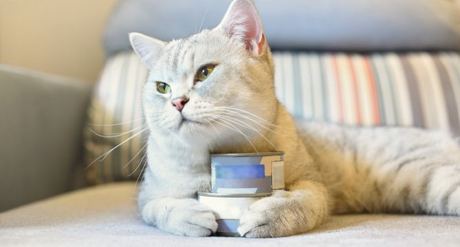 The Best Canned Cat Foods: 50K Reviews
