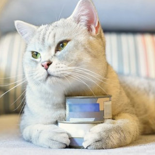 The Best Canned Cat Foods: 51K Reviews