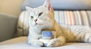 33K Reviews: The Best Canned Cat Foods