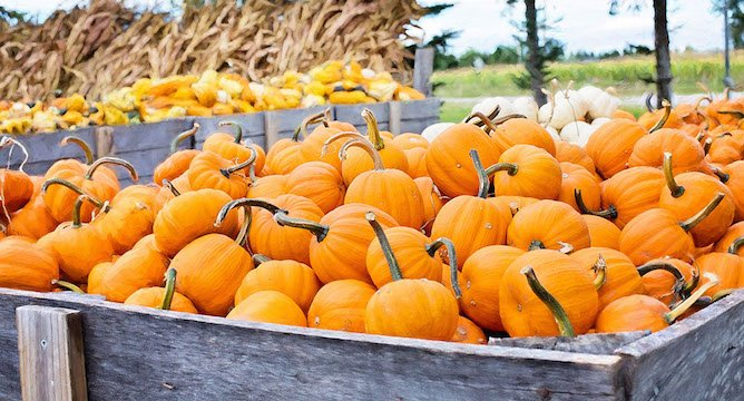 Delectable Canned Pumpkin Recipes