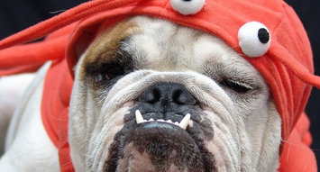18 of the Best Dog Costumes on Influenster