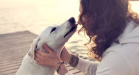 The Cutest Dogs on Influenster