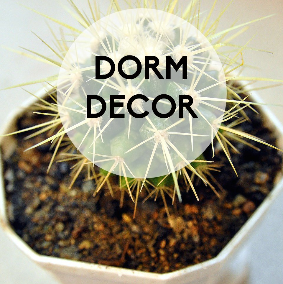 Dorm Decor: 5 Ways to Decorate with Plants