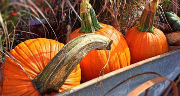 7 Ingenious Ways to Use Pumpkins!