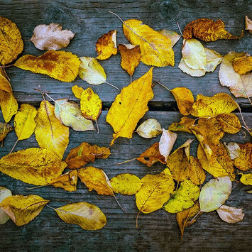 Influenster Playlist: Autumn Acoustics