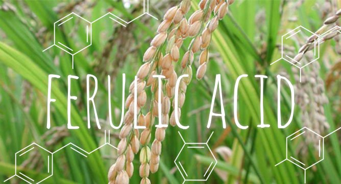 Ingredient Breakdown: Ferulic Acid