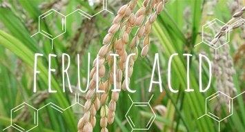 Ingredient Breakdown: Ferulic Acid