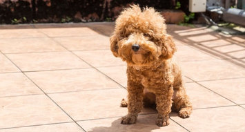 The Best Flea Treatments for Dogs: 9K Reviews