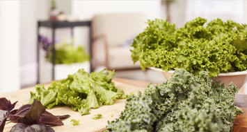 Growing Your Own Leafy Greens and Herbs at Home is Now a Reality