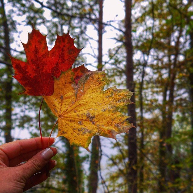 POTD: Autumn Leaves