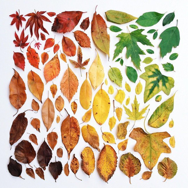 POTD: Arboreal Color Theory