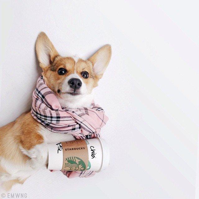 POTD: Puppies & PSLs
