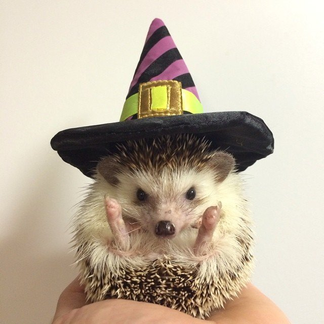 POTD: Halloween Inspo From a Hedgehog