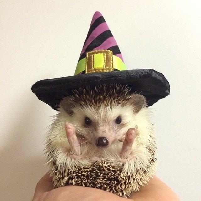 POTD: Halloween Inspo From a Hedgehog