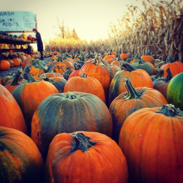 POTD: Pumpkin Patch