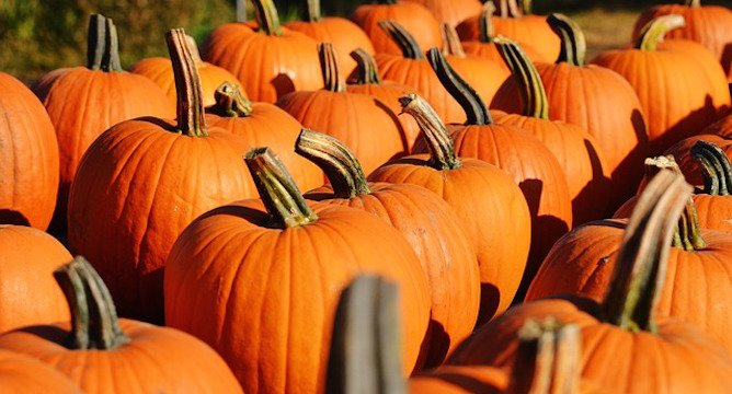 Pumpkin Spice: It's More than a Latte