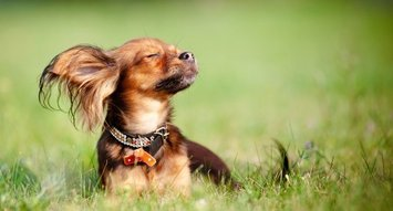 The Best Small Breed Dog Foods
