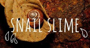 Crazy Skincare Ingredient Alert: Snail Slime