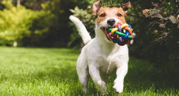 The Best Indestructible Dog Toys