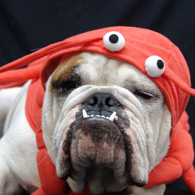 18 a-DOG-able Costumes on Influenster