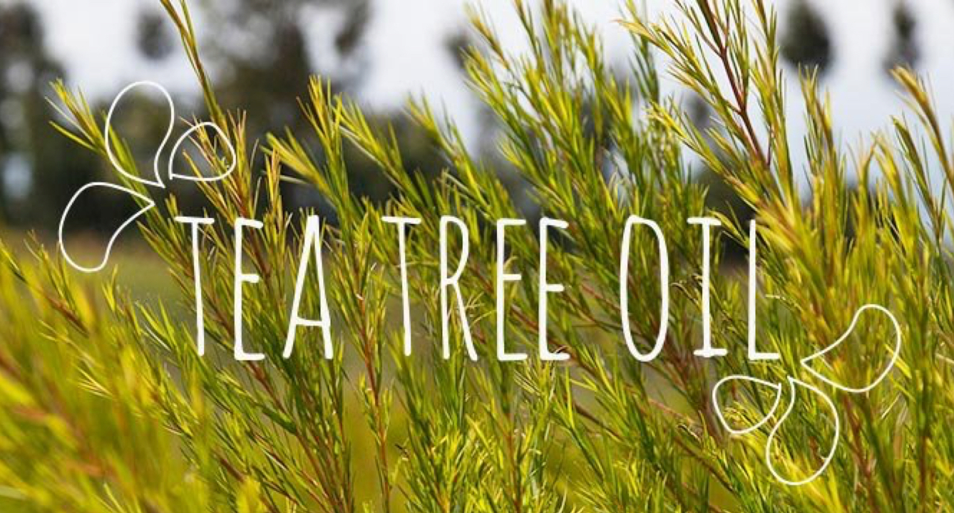 Ingredient Breakdown: Tea Tree Oil