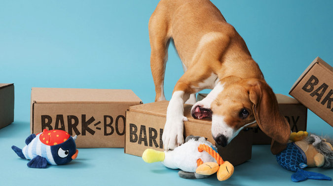 Celebrate National Puppy Day with BarkBox!