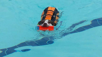 Photo of Kyjen OH2524 Outward Hound Life Jacket Extra Large Orange 15 in. x 22 in. x 14 in. uploaded by Heather S.