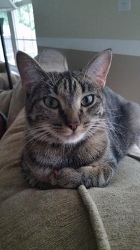 Photo of Purina Cat Chow Healthy Weight uploaded by Melissa H.