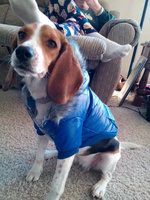 Pets First New York Giants Jersey uploaded by Ashley T.