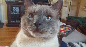 Cosmic Catnip 100% Catnip Filled Cat Toy 24 Karat uploaded by Abby C.