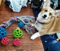 Jw Pet Company Inc JW Pet Hol-ee Roller Dog Chew Toy: Mini - 2 uploaded by Amalia H.