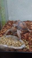 Zilla Land Turtle & Tortoise Food - 6.5 oz uploaded by Erika L.