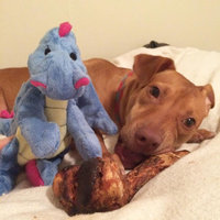 Top Pawtrade; Tuff Chewguard Dragon Dog Toy - Squeaker uploaded by Tori U.