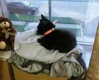 Royal CaninA Kitten Spayed/Neutered Kitten Food uploaded by Amara J.