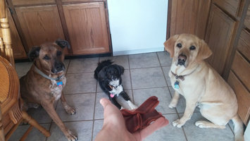 Photo of Purina Beggin' Strips Beggin' Strips Bacon Flavor Bacon Dog Snacks uploaded by Erica G.