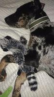 SPOT Skinneeez Stuffing Free Dog Toy uploaded by Lauren K.