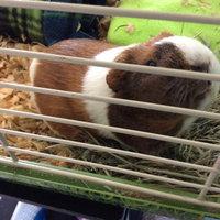 Sunseed Sunatural Guinea Pig Food uploaded by Rachel B.