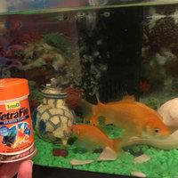 Tetra TetraFin Goldfish Flakes uploaded by Vanessa M.