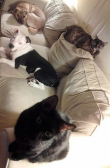 Photo of Humane Society  of the United States uploaded by Gina P.